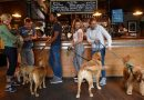 Dog-friendly Pub Awards launched at a Bermondsey pub