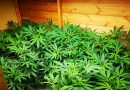 Cannabis factory in South-east London closed by police