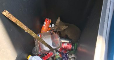 Fox cub rescued from Croydon recycling bin by RSPCA