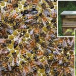 Urban bees buzzing thanks to Barnaby