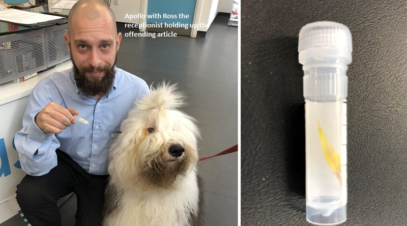 Grass seed is one in the eye for Apollo's Crufts opponents
