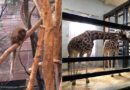 DAYS OUT:  London Zoo in winter